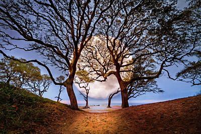 Photograph - Moon Dance by Debra and Dave Vanderlaan