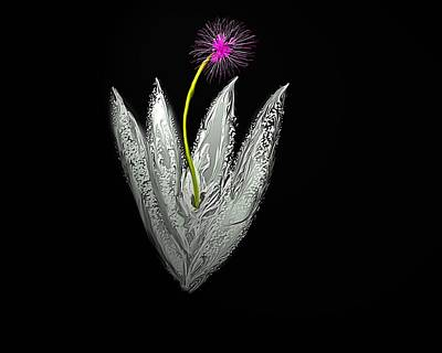 Moon Flower Art Print by John Mueller