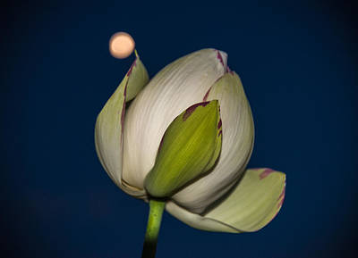 Grounds For Photograph - Moon Flower by Kristopher Schoenleber