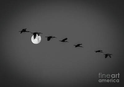 Photograph - Moon Fly By by Tom Claud