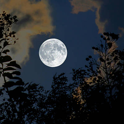 Moonlit Night Photograph - Moon Glo by Trish Mistric