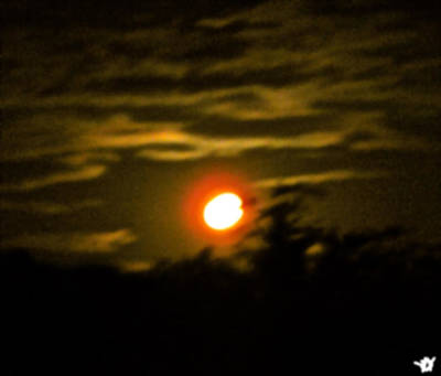 Moon Glow Nights Art Print