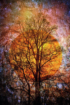 Photograph - Moon Glow On A Starry Night by Debra and Dave Vanderlaan