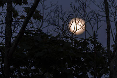 Photograph - Moon Glow Through Trees by Terry DeLuco
