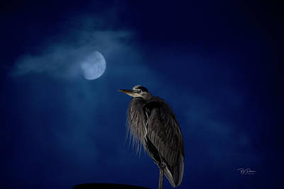 Photograph - Moon Heron by Bill Posner