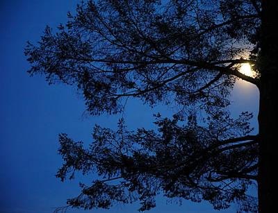 Brunch Digital Art - Moon Hiding In The Tree by Lilia D