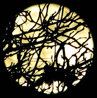 Photograph - Moon IIi by Chris Dunn