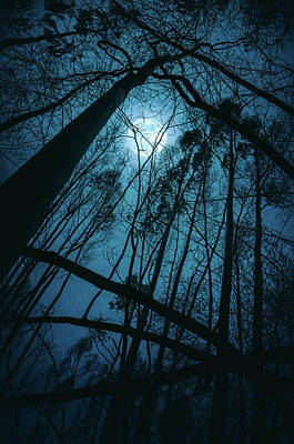 Photograph - Moon In The Trees by Carlos Caetano
