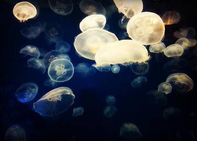 Photograph - Moon Jellyfish by Kathy M Krause