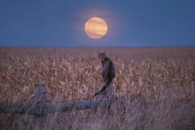 Photograph - Moon Kitty  by Aaron J Groen