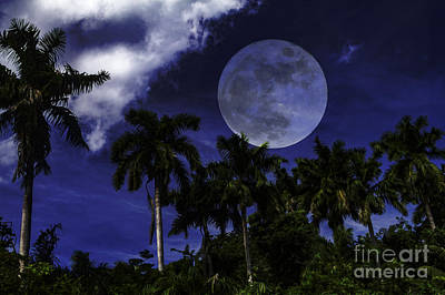 Photograph - Moon Over Belize by Ken Frischkorn