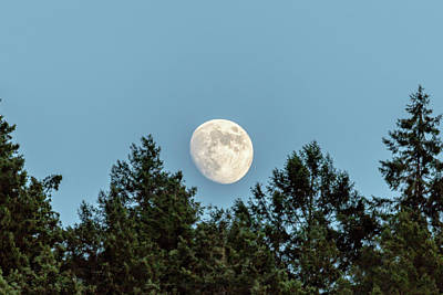Photograph - Moon Over Fir Trees by Belinda Greb
