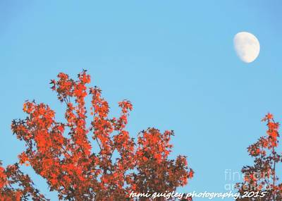 Photograph - Moon Over October by Tami Quigley