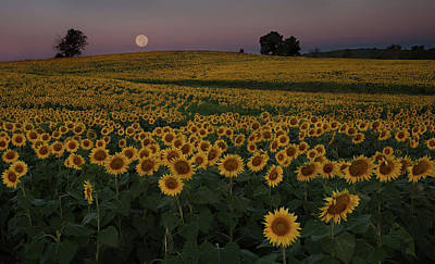Photograph - Moon Over Sunflowers by Eilish Palmer