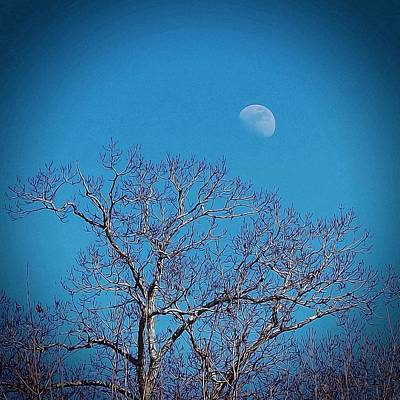 Moon Over Tree Art Print