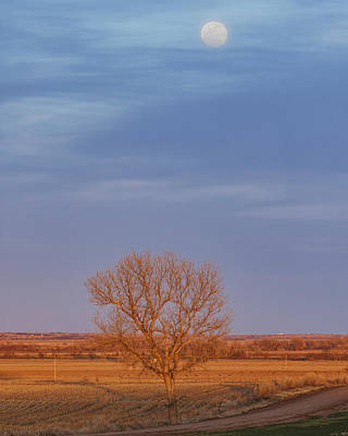 Photograph - Moon Over Tree by Rob Graham