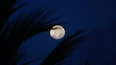 Photograph - Moon Palm Fronds by Lawrence S Richardson Jr
