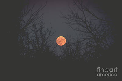 Photograph - Moon Rise by Cheryl Baxter