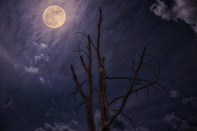 Photograph - Moon Rise by Jerry Golab
