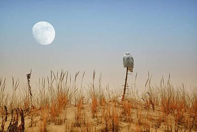 Moon Rise Snowy Owl Art Print