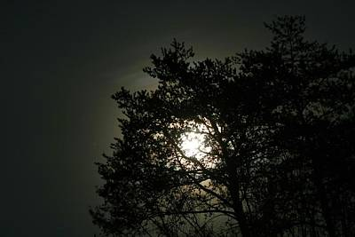 Photograph - Moon Rising In The Trees 2 by Kathryn Meyer