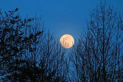 Photograph - Moon Rising In The Trees by Kathryn Meyer