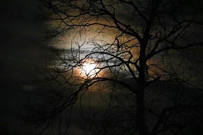 Photograph - Moon Setting In Tree Branches by Kathryn Meyer