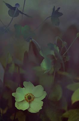 Photograph - Moon Sonata by Jenny Rainbow