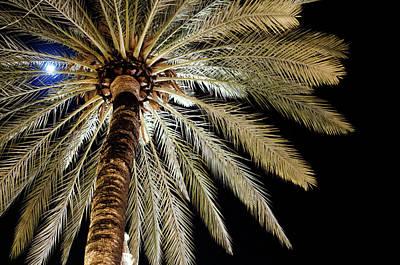 Moon Through Palm Tree Art Print