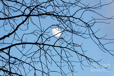 Photograph - Moon Through Tangled Branches by John  Mitchell