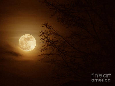 Photograph - Moon Through The Trees by RLH Photography