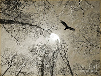 Photograph - Moon Through The Trees by Savannah Gibbs