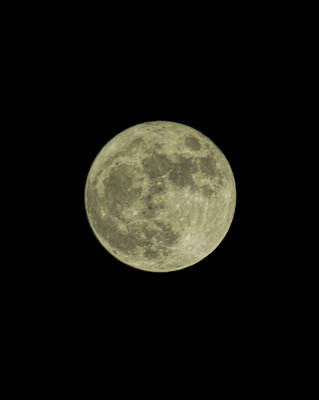 Photograph - December Supermoon by Marilyn Wilson