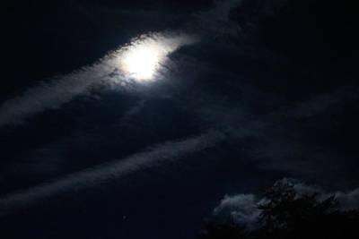 Photograph - Moonbeams Above The Trees by Kathryn Meyer