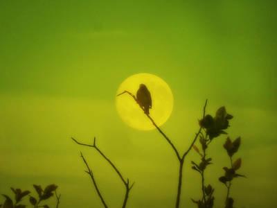 Photograph - Moonbird by Mark Blauhoefer