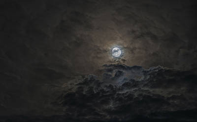 Photograph - Moondance by Loree Johnson