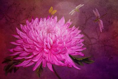 Pink Chrysanthemums Photograph - Moondance by Marina Kojukhova