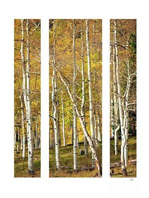 Photograph - Mooneys Triptych by Doug Sturgess
