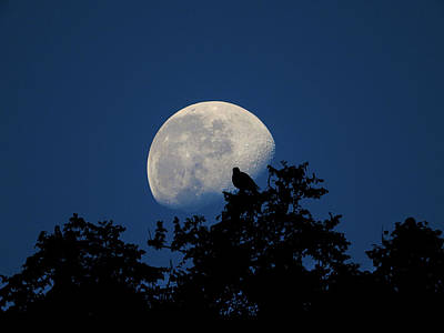 Photograph - Moonfall by Mark Blauhoefer