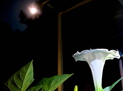 Photograph - Moonflower In The Moonlight by Charlie Brock