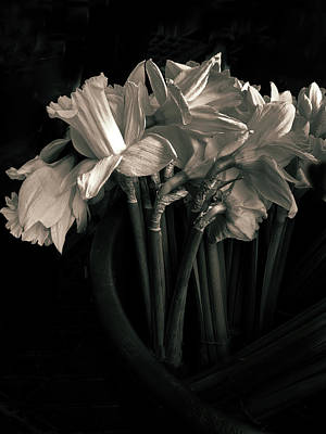 Photograph - Moonlight And Daffodils by Jessica Jenney