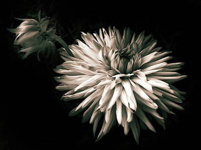 Photograph - Moonlight And Dahlia by Jessica Jenney