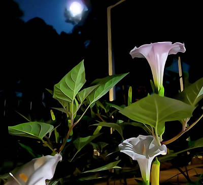 Photograph - Moonlight And Moonflowers by Charlie Brock