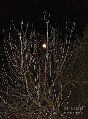 Photograph - Moonlight Branches by Diamante Lavendar