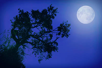 Photograph - Moonlight Dreams In Blue by John Williams