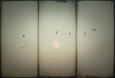 Digital Art - Moonlight Flight by Melinda Dreyer