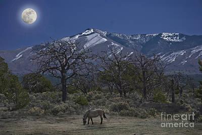 Moonlight Horse Art Print by Jim Wright