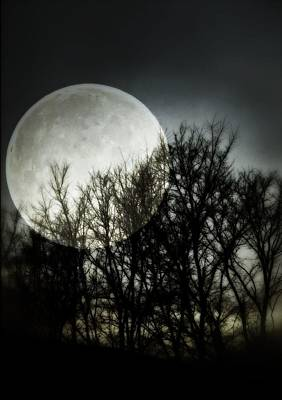 Photograph - Moonlight by Marianna Mills