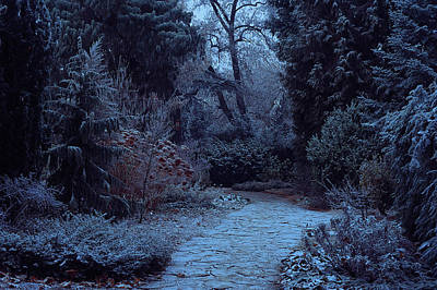 Photograph - Moonlight Pathway. Enchanted Winter Garden by Jenny Rainbow