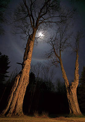 Maple Tree Digital Art - Moonlight Sentinels by Jerry LoFaro